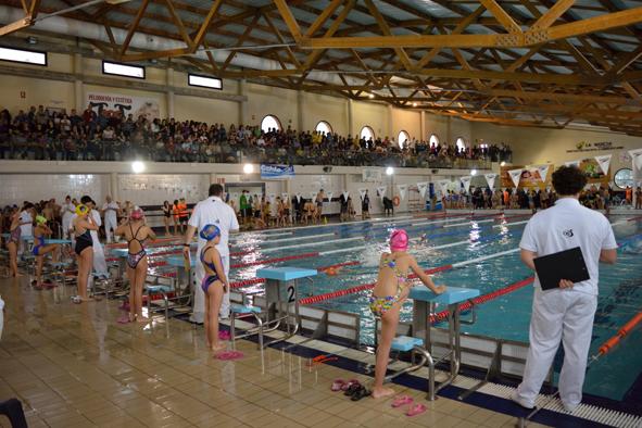 La nucia 246 nadadores participar n en el ii trofeo de for Piscina municipal camilo cano
